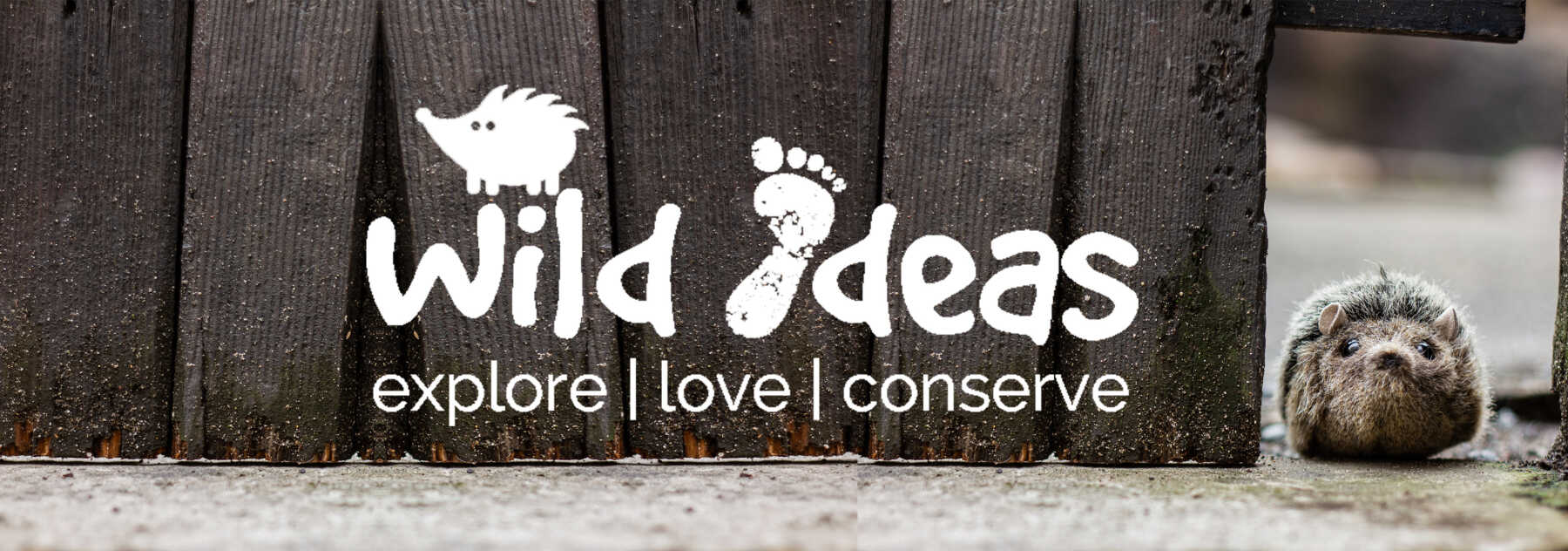 Featured Image for Wild Ideas